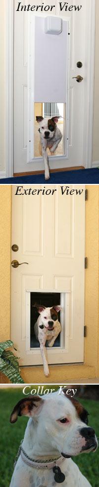 Plexidor Dog Door Installer Az Dog Door Installation Arizona