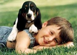 Boy_beagle